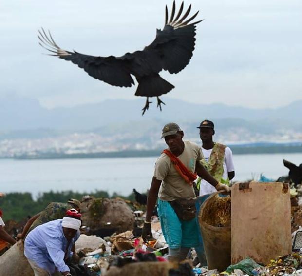 Catadores no lixão de Gramacho; porcos, urubus e lixo se misturam aos catadores de materiais recicláveis - Cópia