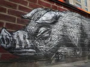 trabalho de ROA O porco selvagem